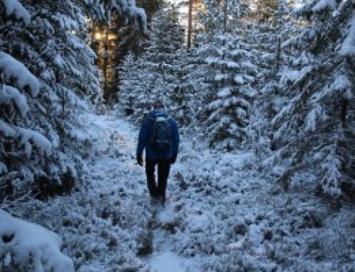 Sneeuwwandeling in Zweeds Värmland