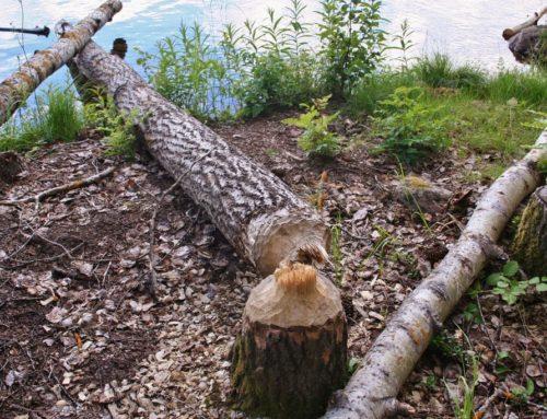 Skräddrabo: diep in de bossen van Hälsingland