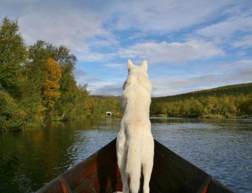 Op zoek naar het goud van Lapland